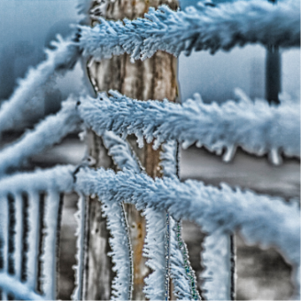 David Fraser 'Hoar Frost' photography
