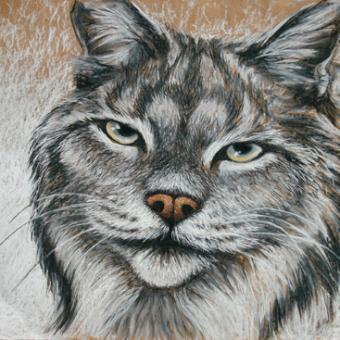 Vince Kanarek 'lynx' chalk pastel and conte