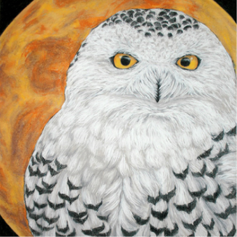 Vince Kanarek 'snowyowl' chalk pastel and conte