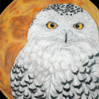 Vince Kanarek 'snowyowl' chalk pastel and conte